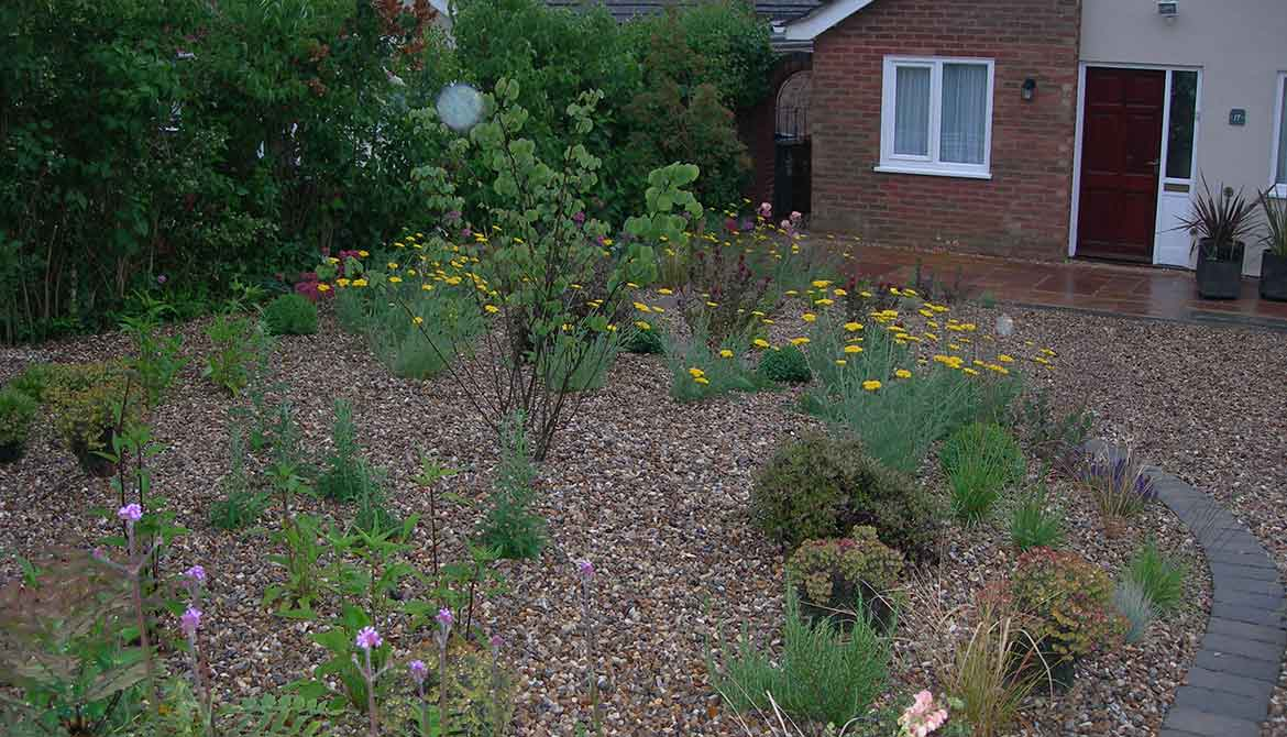 Low maintenance garden with colour in norwich